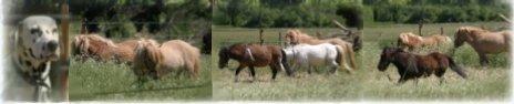poney paradou